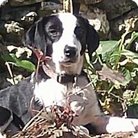 Adopt A Pet :: Grace - Allentown, PA
