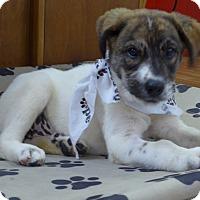 Adopt A Pet :: Faith - Manning, SC