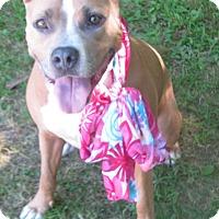 Adopt A Pet :: Ayla - Voorhees, NJ