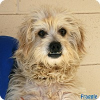 Adopt A Pet :: Fraggle Rock - Santa Maria, CA
