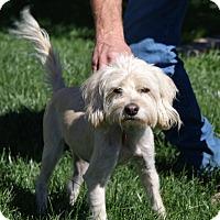 Adopt A Pet :: Mali - Apple Valley, UT