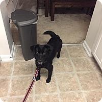 Adopt A Pet :: Gabby - Lima, PA