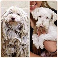 Adopt A Pet :: Buddy - Custer, WA