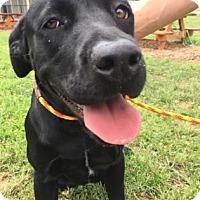 Adopt A Pet :: Lena - Cumming, GA