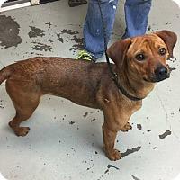 Adopt A Pet :: Dawn - Breinigsville, PA