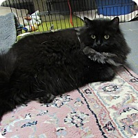 Adopt A Pet :: Lizzie - Cannon Falls, MN