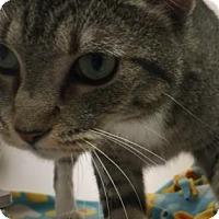 Adopt A Pet :: Nelvana - Cumming, GA