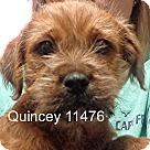 Adopt A Pet :: Quincey