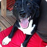 Adopt A Pet :: Spud - Hazard, KY