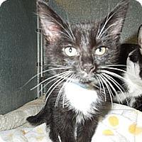 Adopt A Pet :: William - Medina, OH