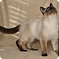 Adopt A Pet :: Kati Kati - Davis, CA