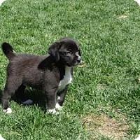 Adopt A Pet :: baby Geoff - Marlton, NJ