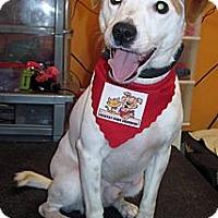Adopt A Pet :: Buzz - Welland, ON