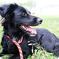 Adopt A Pet :: Hanna - Lewisville, IN