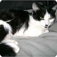 Adopt A Pet :: Lily - Etobicoke, ON
