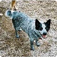 Adopt A Pet :: Eva *ADOPTION PENDING* - Phoenix, AZ