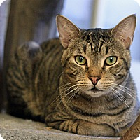 Adopt A Pet :: Braveheart - Columbia, MD
