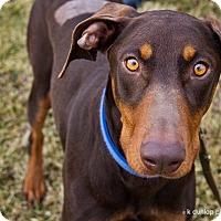 Adopt A Pet :: Isabella--update - New Richmond, OH
