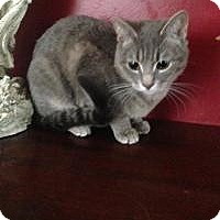 Adopt A Pet :: Misty - Medford, NJ