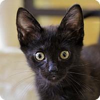 Adopt A Pet :: Spratt - Mission Viejo, CA
