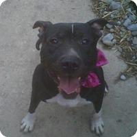 Adopt A Pet :: Kiera - Kimberton, PA