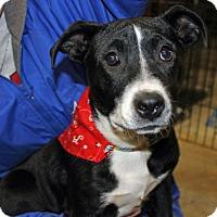 Adopt A Pet :: Xena - Marietta, GA