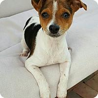 Adopt A Pet :: Lisa - Thousand Oaks, CA