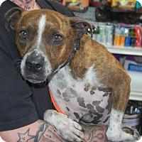 Adopt A Pet :: JuneBug - Brooklyn, NY
