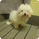 Adopt A Pet :: ROCSI