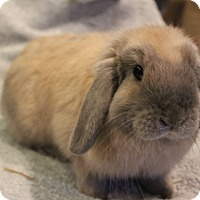 Adopt A Pet :: Holly - Hillside, NJ