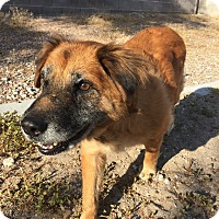 Adopt A Pet :: Ginger 2 - Las Vegas, NV