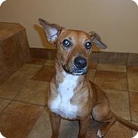 Adopt A Pet :: Doc *Petsmart GB* - Appleton, WI