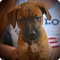Adopt A Pet :: Christy - Glastonbury, CT