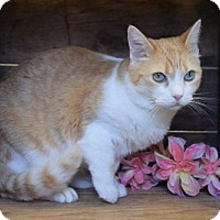 Adopt A Pet :: Lucy - Herndon, VA