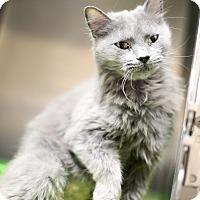 Adopt A Pet :: Truffle - Appleton, WI
