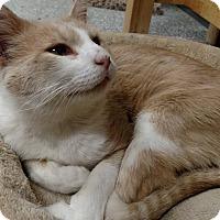 Adopt A Pet :: Owen - Chaska, MN