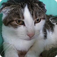 Adopt A Pet :: Devereau - Franklin, NH