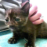 Adopt A Pet :: SCOUT - Conroe, TX