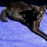 Adopt A Pet :: Anders (teenage male) - Harrisburg, PA
