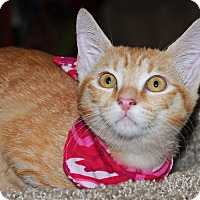 Adopt A Pet :: Leia - Garland, TX