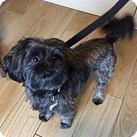 Adopt A Pet :: Chumley - Redondo Beach, CA