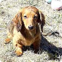 Adopt A Pet :: Elise - San Jose, CA