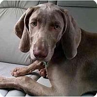 Adopt A Pet :: Mason  **ADOPTED** - Eustis, FL