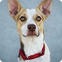Adopt A Pet :: Marco - Phoenix, AZ