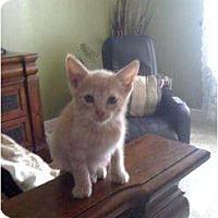 Adopt A Pet :: Barney - Mobile, AL