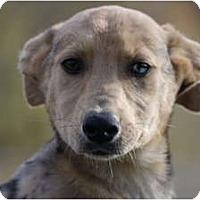 Adopt A Pet :: Katalina - Providence, RI
