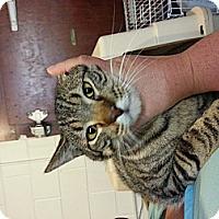 Adopt A Pet :: Tyler - Walnut, IA
