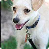 Adopt A Pet :: Frodeo - Studio City, CA