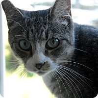Adopt A Pet :: Queen Eliza - Winchendon, MA