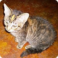 Adopt A Pet :: Topaz - Ravenna, TX